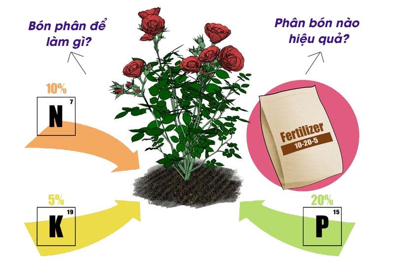 Dùng phân Kali - Cách làm cành hoa đào nở nhanh nhất