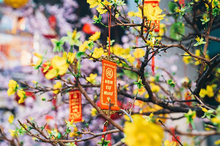 Ý nghĩa  hoa mai vàng ngày Tết
