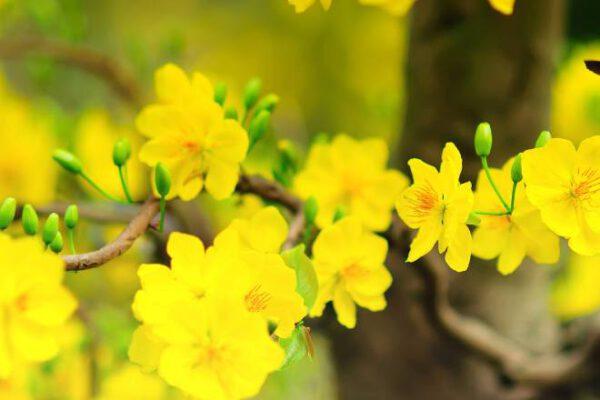 Các nhân tố ảnh hưởng đến hoa mai